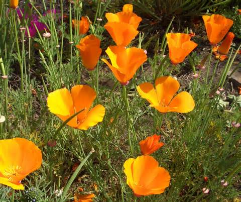 The Way of The Witch Newsletter | Plant Focus: California